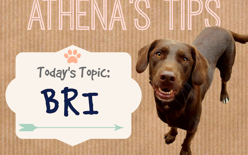 Athena's Tips and Tidbits