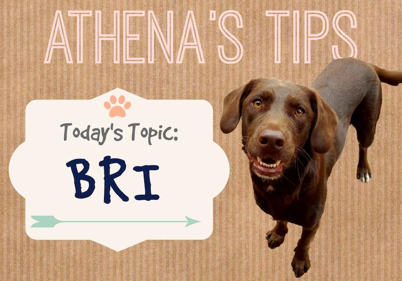 Athenas Tips Biblical Responsible Investing