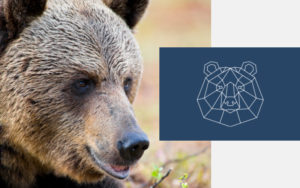 Grizzly bear next to geometric bear icon